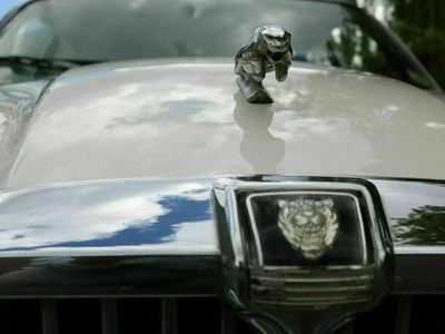 gebraucht Jaguar XJ12 Sovereign Bj 83 Leder Holz Lä...