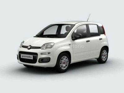 usata Fiat Panda PANDASerie 3 1.2 69cv S&S Easy Euro 6d-Temp (Solo