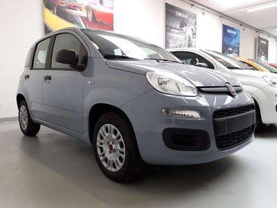 usata Fiat Panda New1.2 69CV EASY Km 0 EURO 6