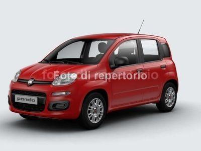 usata Fiat Panda PANDASerie 3 1.2 69cv S&S Easy Euro 6d-Temp
