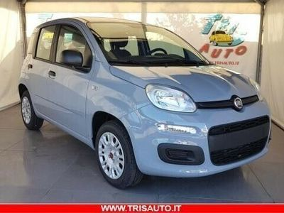 usata Fiat Panda Panda1.2 Easy
